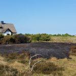 Abgebrannte Fläche in der Dünenheide